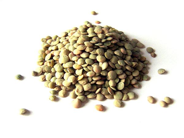 Les lentilles sont des légumineuses qui constituent une bonne source de nutriments
