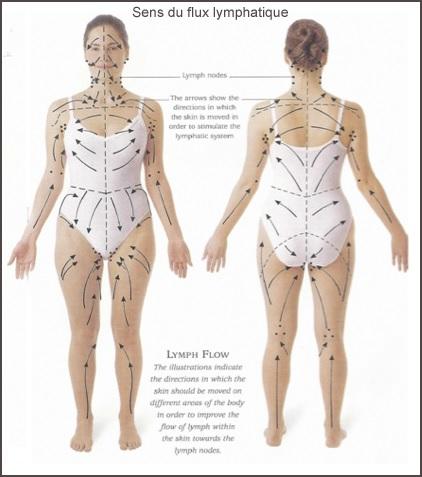 En respectant l'ordre des mouvements de brossage sur le corps, le brossage à sec permet d'élminer la cellulite et la sensation de jambes lourdes